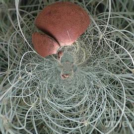 Kim Peto - String Theory