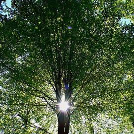 Pavel Jankasek - Sun In The Tree