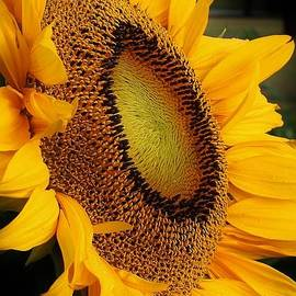 Bruce Bley - Sunbathing