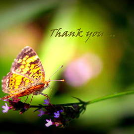 Travis Truelove - Thank You