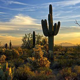 Saija  Lehtonen - The Golden Southwest