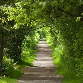 Sabine Edrissi - The Green Tunnel