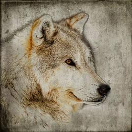 Steve McKinzie - The Wolf