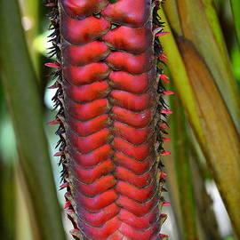 Stan Askew - Waimea Nature Preserve - Oahu