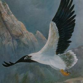 Rita Palm - White Bellied Sea Eagle