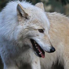 Athena Mckinzie - White Wolf