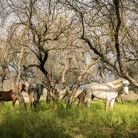 Ed  Cheremet - Wild Horses