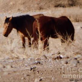 Bobbee Rickard - Wild Nevada Mustangs