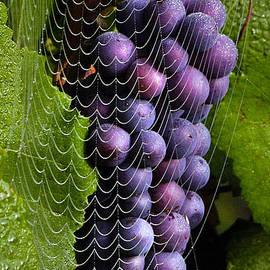 Jean Noren - Wine in a web