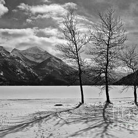 Inge Riis McDonald - Winter trees