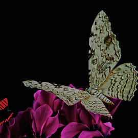 Leslie Crotty - Witch Moth and butterfly meet at midnight