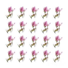 Andee Design - 20 Pink Magnolias