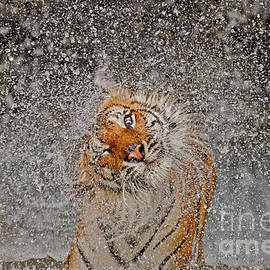 Ashley Vincent - 2012 Nat Geo Photo Contest Winner