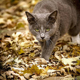 Rick Grisolano Photography LLC - 2013 Nov Gracie in the Leaves 5