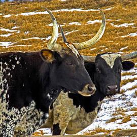 Rick Grisolano Photography LLC - 2014 Feb Longhorns at the trough
