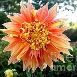 Baljit Chadha - Love Flowers