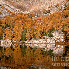 Tracy Knauer -  Larch tree reflection in Cooney Lake