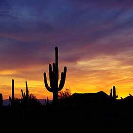 Saija  Lehtonen - A Saguaro Sunset