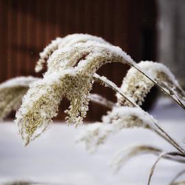 Timothy Hacker - Frosty Grass 1