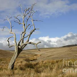 John Wallace - A dead tree in an Australian Landscape