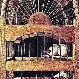 Danielle  Parent - 3 Birds In A Wooden Cage