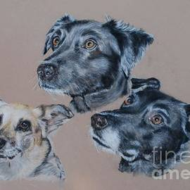 Tanya Patey - 3 Dogs