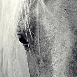 Laurinda Bowling - Equine Study