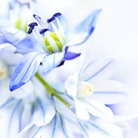 Elena Elisseeva - First spring flowers