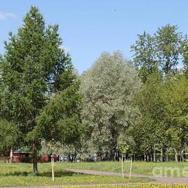 Evgeny Pisarev - In park