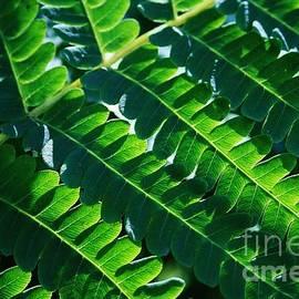Neal  Eslinger - Leaves of Green
