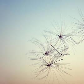 Sabina  Horvat - Nature Abstract