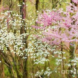 Darren Fisher - Spring