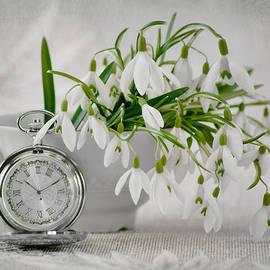 Steffen Gierok - Spring Time