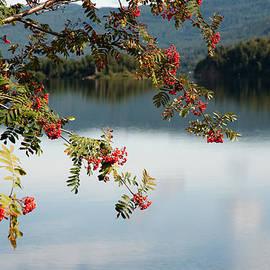 Zina Zinchik - Tranquil landscape
