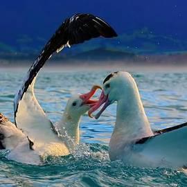 Amanda Stadther - Wandering Albatross