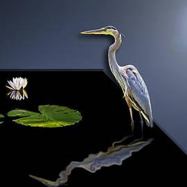 Susan Whitaker - 3D Blue Heron Reflection