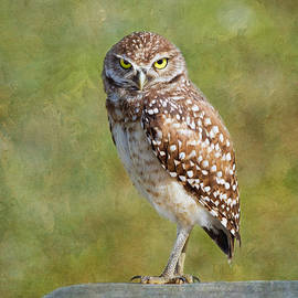 Kim Hojnacki - Burrowing Owl