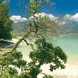 Sharon Mau - Kanaha Beach Maui Hawaii