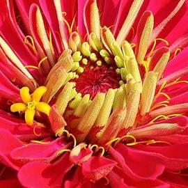 Bruce Bley - Pink Sensation