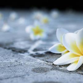 Nila Newsom - Plumaria Flowers