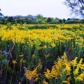 Adam Asar - Wild Flowers