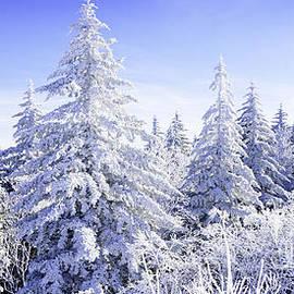 Thomas R Fletcher - Winter along the Highland Scenic Highway