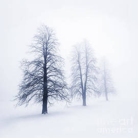 Elena Elisseeva - Winter trees in fog