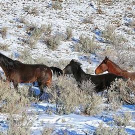 Maria Jansson - 41. Lockwood Mustangs