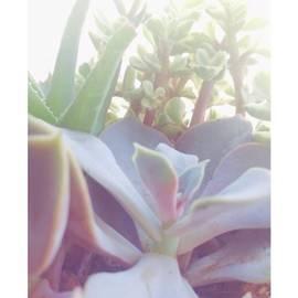 Jennifer Kenyon - Instagram Photo