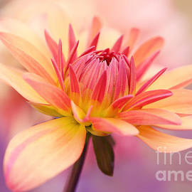 HJBH Photography - Dahlia blooming