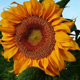 Bruce Bley - Basking in the Sun