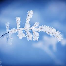Roksana Bashyrova - Frozen meadow plant