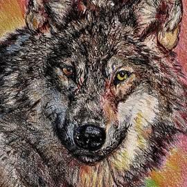 J McCombie - Portrait of a Gray Wolf
