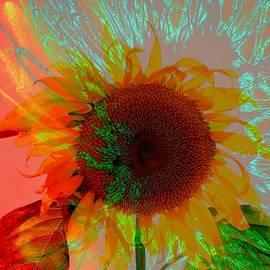 Rick Rauzi - Sunflower